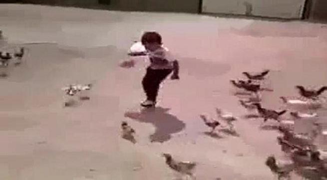 Hài hước em bé bị đàn gà truy đuổi